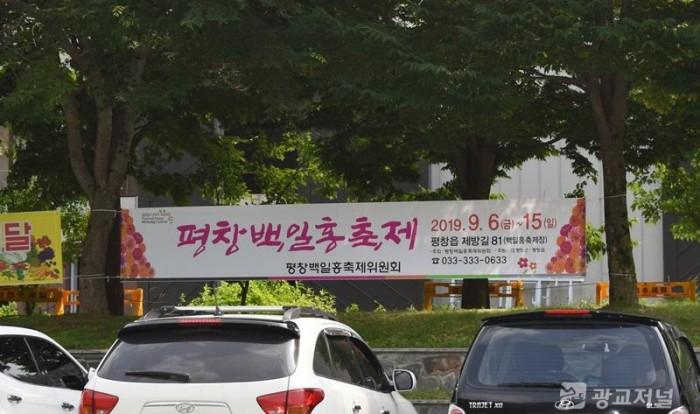 백일홍축제 홍보.JPG