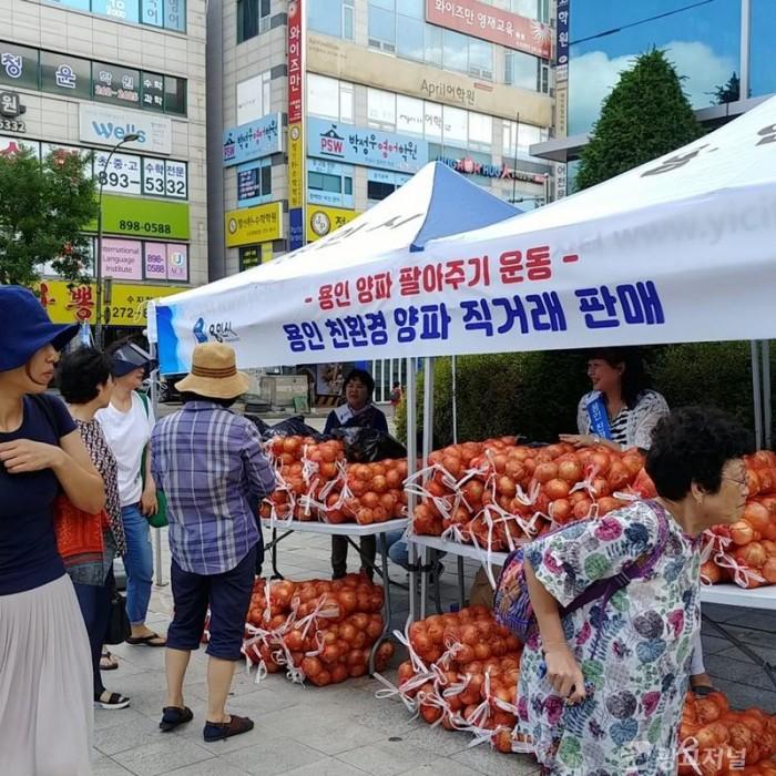 (사진) 용인 친환경 양파 직거래 판매 행사.jpg