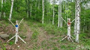 청옥산 자작나무 숲 포토존(나무인형).jpg