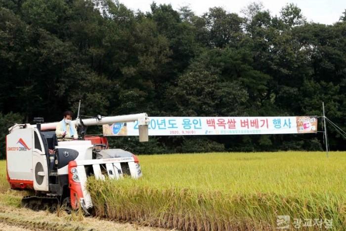(사진) 벼베기 시연회 (2).JPG