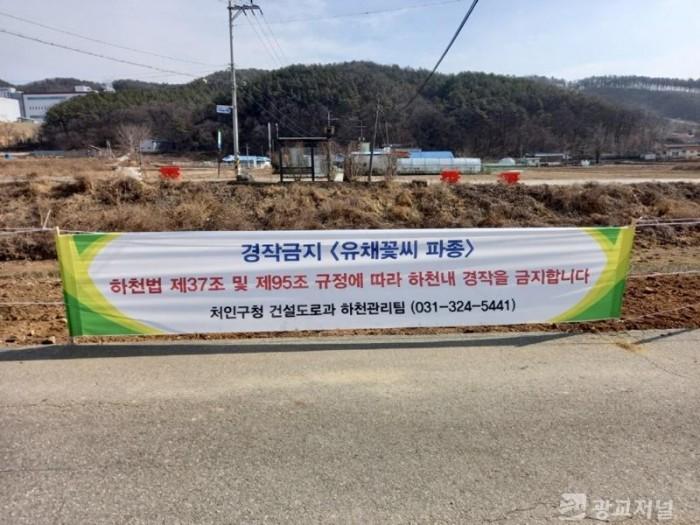 (사진) 불법경작 단속 후 유채꽃씨를 파종한 완장천 모습.jpg