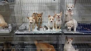 (사진) 시 동물보호센터에 보호중인 유기 동물들.jpg