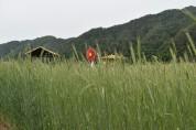 호밀밭, 초록 물결 !