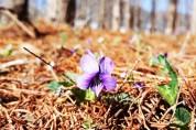 왔다, 봄 !