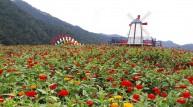 [포토뉴스] 평창강변, 백일홍 꽃밭의 '설레는 기다림'