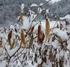 [포토뉴스] 평창군, 눈 오는 날 두환씨네 고추밭