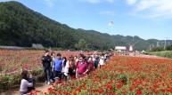 [포토뉴스] 오늘, 꽃길을 걸었네!