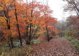 [포토뉴스] 용수골 여울은 가을을 실어오는 중…